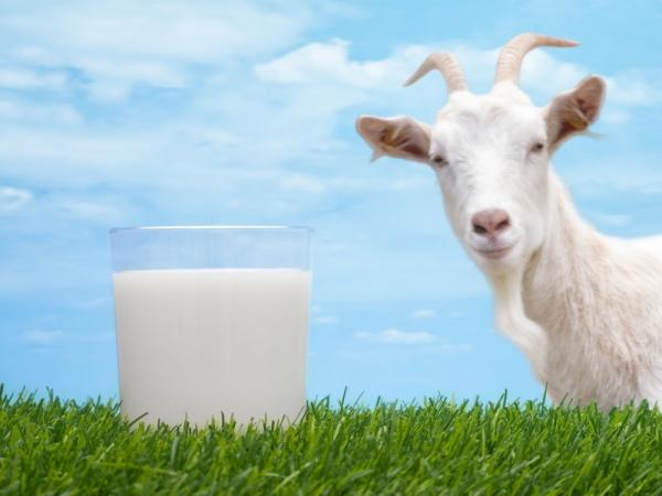 Laptele de capră